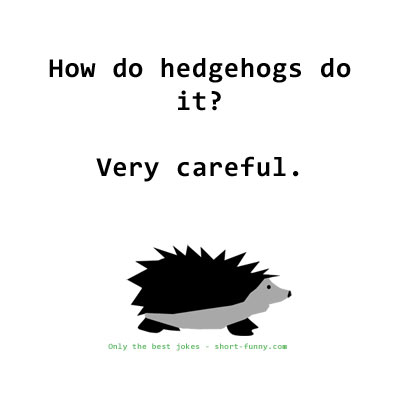 Hedgehog Joke