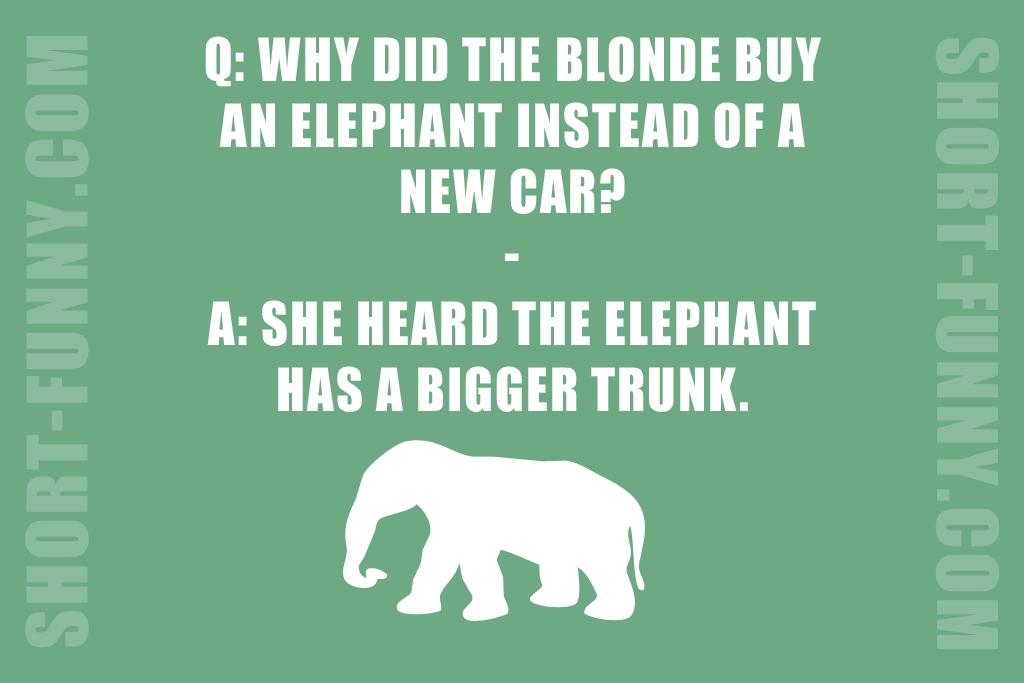 Blonde Car Humor