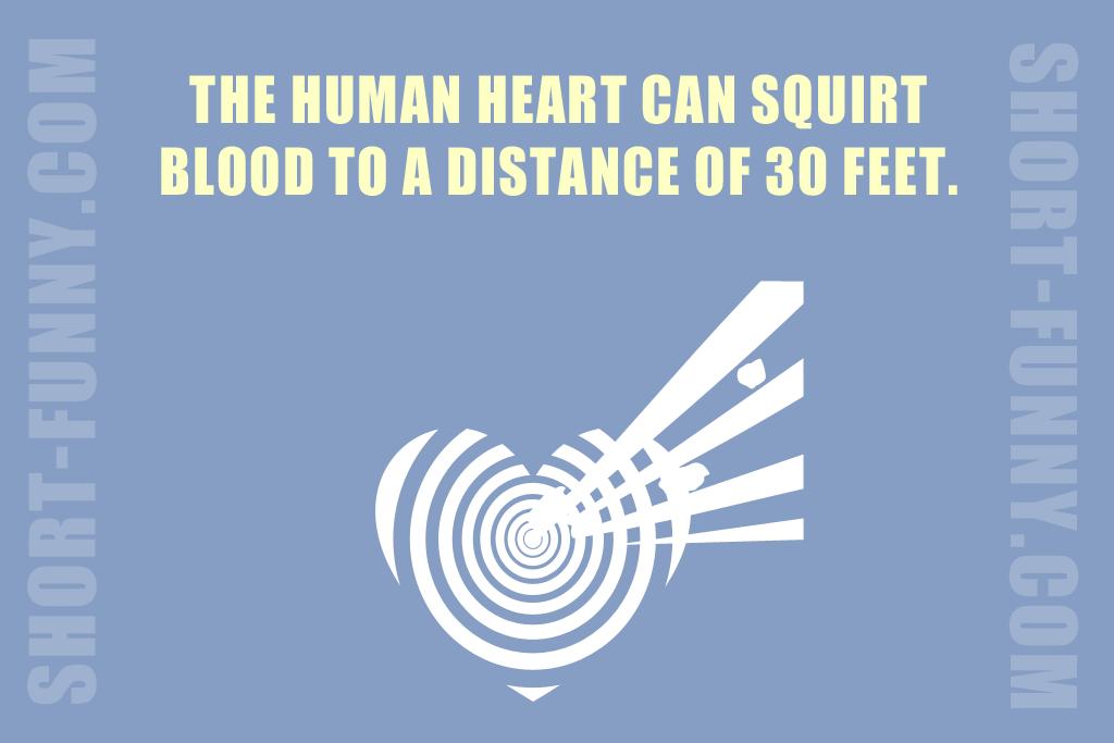 Shocking Human Body Fun Fact