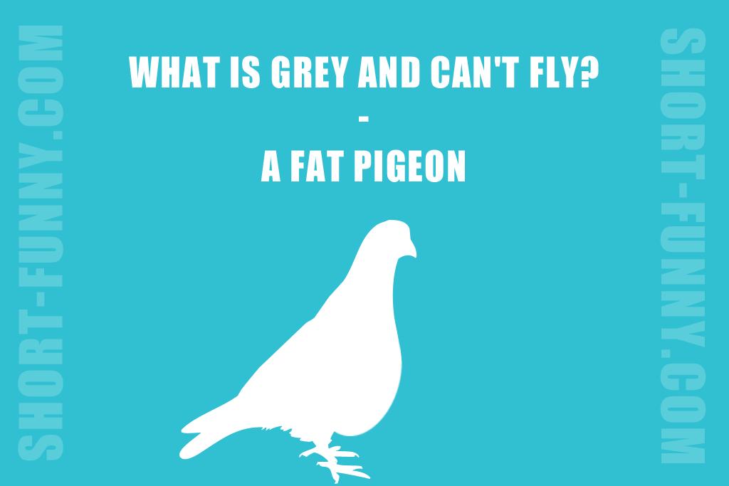 Great pigeon joke